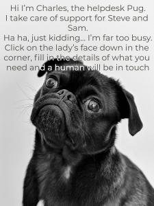adult-black-pug-1851164